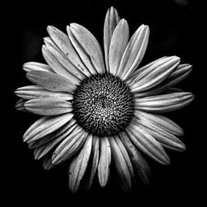 Online form Flower